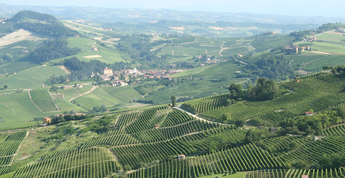 piemonte italy landscape with vineyards